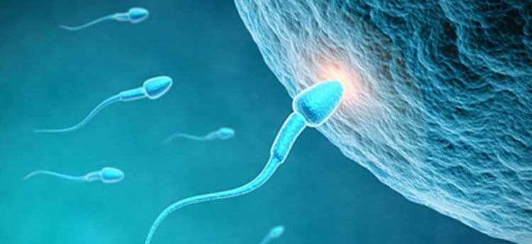 wave-new-bio-research-focuses-male-fertility