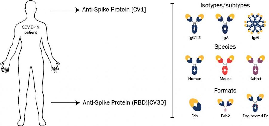 absolute-antibody-offers-sars-cov-2-neutralizing