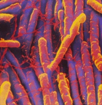 Clostridium-difficile
