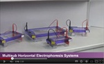 GEL ELECTROPHORESIS SYSTEMS video