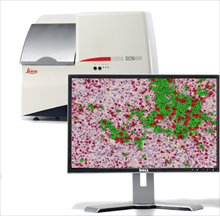 Tissue IA – Automated Image Analysis for Brightfield and Fluorescence Digital Pathology