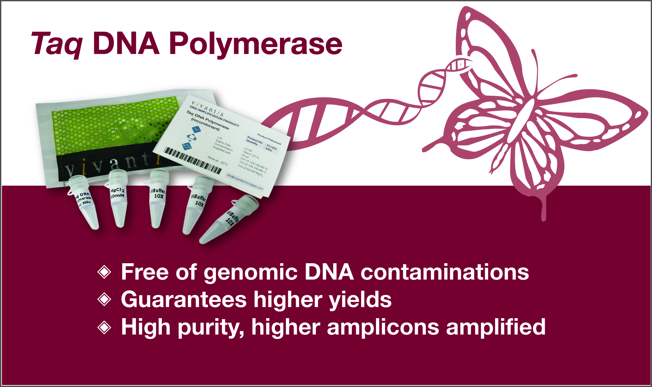 Taq DNA Polymerase